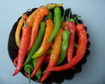 Bulgarian sweet pepper, Rogatschi paprika, 20 heirloom seeds