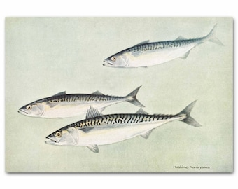 "Fish Decor, 1930s Fish Art, Vintage Ocean Art Print -- ""Mackerels"" No. 52"