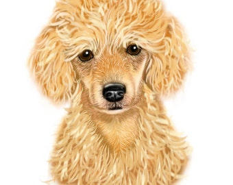 4 Apricot Poodle Puppy note cards