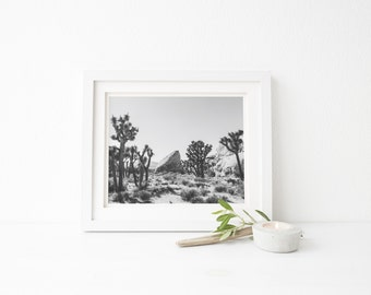 joshua tree black and white photograph, black and white joshua tree, joshua tree landscape photo