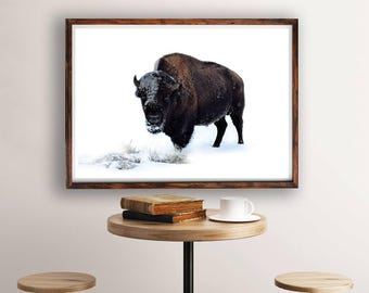 Buffalo Print, Bison Print, Bison Wall Art, Snow, Colour Photo, Large Wall Art Print, Animal Prints, Living Room Art, Buffalo Photography
