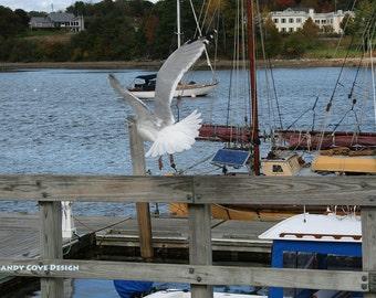 Belfast Takeoff, Maine, Seascape, Cove, Seagull, Boats, Docks, Fine Art, Wall Art