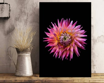 Pink Dahlia Print Flower Photo Pink Decor Botanical Art Floral Fine Art Still Life Dahlia Photo Flower Wall Art Nature Photo Gift For Her