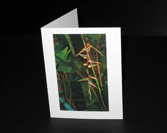 Platanillo Greeting Card