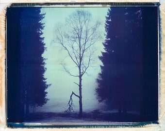Norway, Old Polaroids, Mamiya, Polaroid Photography, Winter, Eerie, Misty, Woods, RB67, type 670, Landscape Photography, Tree, Norwegian