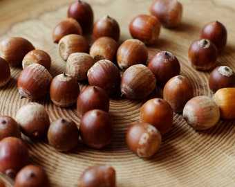100 Real Acorns, Natural Acorns, Rustic wedding Decor, Floral preform for crafts, Natural Home decor , Florist crafts