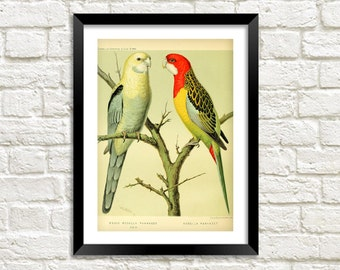 PARROTS PRINT: Vintage Bird Art Illustration Wall Hanging (A4 / A3 Size)