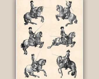 Horse Riding art, Horses Print  Antique Print Horse Dressage Equestrian Print, country cottage decor, gift for horse lovers PRINTABLE 16X20