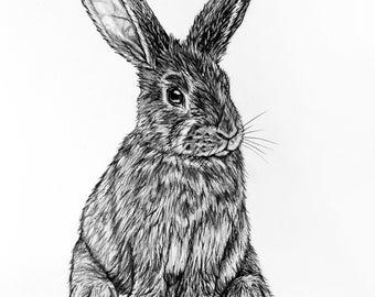 Bunny Rabbit Pencil Drawing - 3 sitting bunny