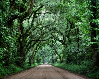 Fine Art Film Photography Print, Nature Photography, Live Oak Trees and Dirt Road