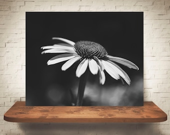 Flower Photograph - Fine Art Print - Black White Photo - Wall Art - Floral Decor - Wall Decor - Pictures of Flowers - Coneflowers