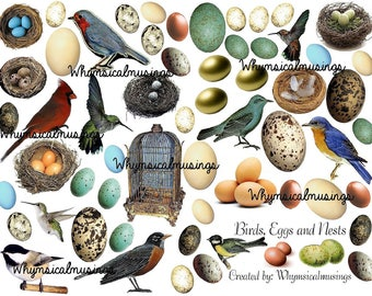 Digital Collage Sheet~ Birds, Eggs and Nests~ Digital Download ~ Mixed Media ~ Ephemera