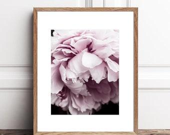 Peony Print Printable Photography Download