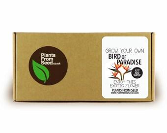 Grow Your Own Bird of Paradise Mini Plant Kit