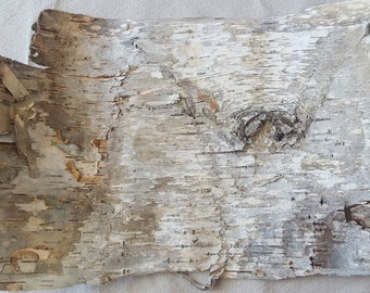 Birch Bark Patience, Birch Sheet, Birch Strip, Ethically Harvested, Creative  Projects,