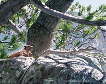 Painting in acrylic of a Groundhog basking in the Sun on a rock of the Pyrenees mountains