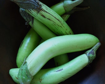 EGGPLANT - Japanese Long Green Eggplant Seeds