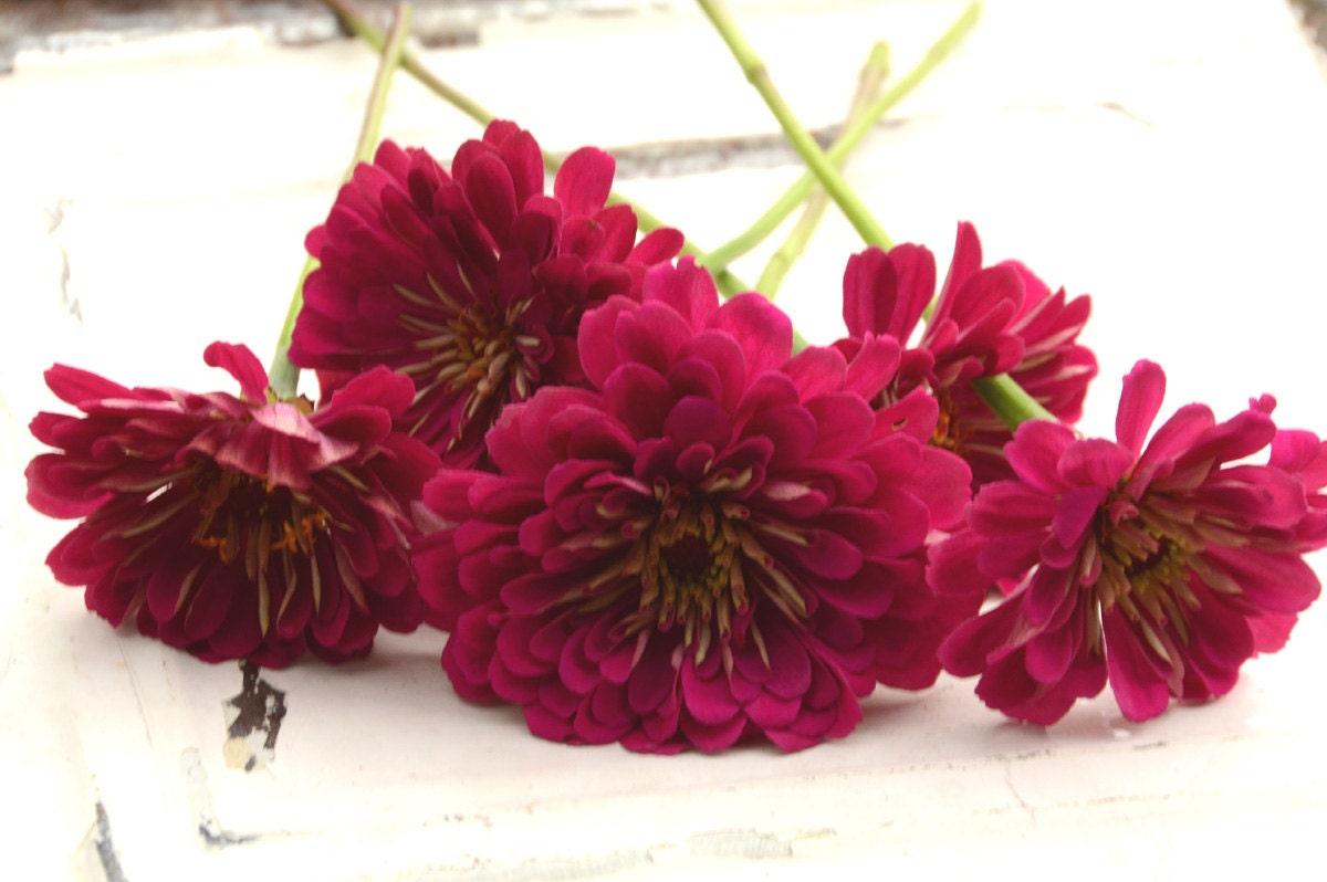 3 Flower Seed Varieties, Zinnia Seeds, Mixed Wheat Celosia, Great ...
