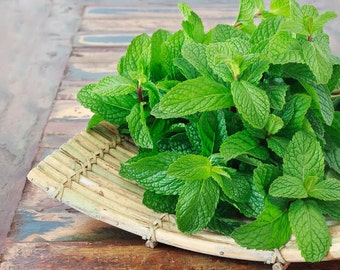 HM) FRUIT PUNCH Mint~Seeds!!~~~~~~~Flavorful Scent!!