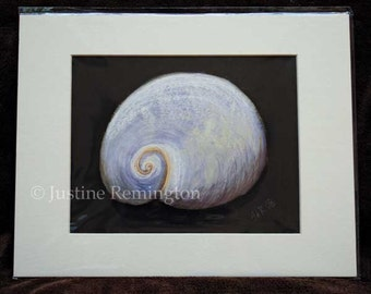 Babys Ear Shell - giclee reproduction print in white mat