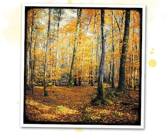 Yellow trees - Nature - photo art signed 20 x 20 cm