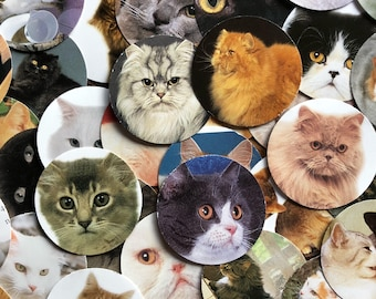 Cat Lovers Table Confetti ~ Cat Confetti Cuts and Table Scatter ~ Cat Lovers Scrap Book Supply