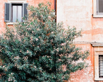 The Laurel Tree - Rome in the Spring time, Rome in blossom, Italy, Rome Wall Art, Rome Home Decor