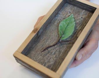 Glass Alder Leaf