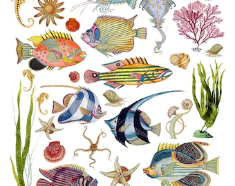 Tropical Fish Digital Collage Sheet, Scrapbook Paper, ImageSource, Nature Printable Clip Art Download