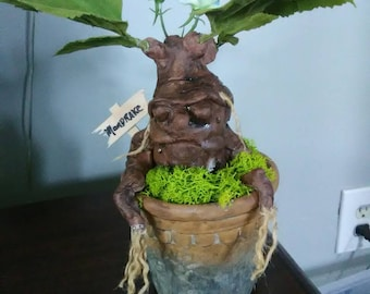 Magical Mandrake Root