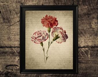 Vintage Carnation print, flower decor, vintage botanical wall art, carnation flower print