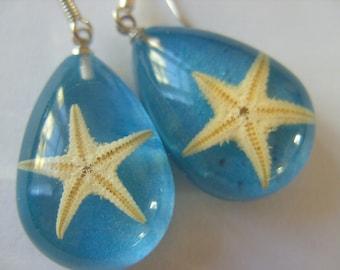 Aqua blue, Real starfish, starfish earrings, Ocean, sea life, drop, by newellsJewels on etsy