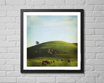 """rural landscape photography print / nature Sonoma County California golden hour cow art decor / green large wall art /  """"Bodega Highway"""""""