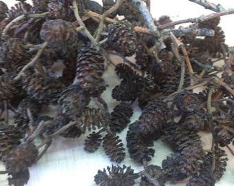 Alder cones 200+ Clusters, European alder, Small cones for craft projects