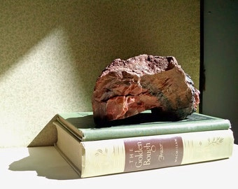 Petrified Wood Rock Fossil Stone Natural History Specimen Curiosities