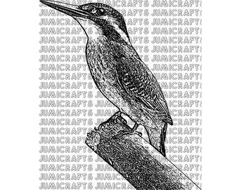 Kingfisher Digital Stamp, Clip Art, Line Art