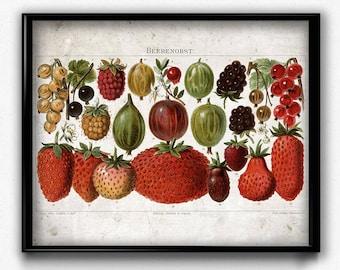 Strawberries Fruit Vintage Print - Fruit Poster - Fruit Art - Home Decor - Home Art - Kitchen Art - Kitchen Decor - Botanical Print