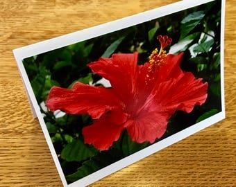 Flower Photo Card