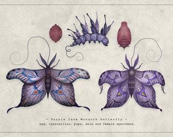 Purple Cave Monarch butterfly - A4 Art print