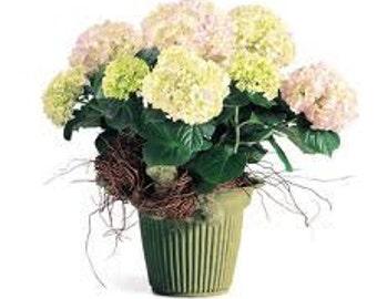 "Design Bowl No. 5 Eco Friendly ""Fresh Basil"" - (2 pack)"