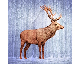 Majestic Stags, Greeting Cards. Original artwork of red deer in woodlands. Pack of 4 different designs. 150mm x 150mm.