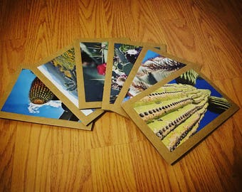 Single Photography  Note Cards