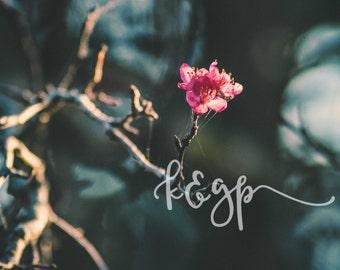 Fall Crabapple Blossom DIGITAL DOWNLOAD - Macro Flower Photography