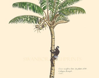 Palm Tree Print. Tropical Coconut PalmTree. Beach Home Palm Tree Decor Wall Art. Natural History Print of Palm Trees
