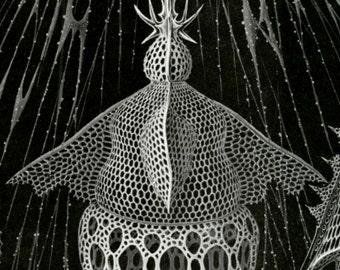 Sea Plankton, Plankton Drawing, Plankton Sea, Scientific Drawing, Drawing Plankton, Drawing Scientific, Sea Drawing, Drawing Sea, Haeckel
