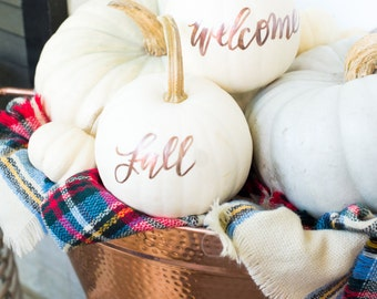 Real White Calligraphy Pumpkins for Fall and Thanksgiving