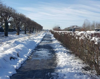 walk with the snow