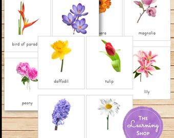 Montessori Inspired Flower Cards