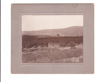 1910 Vintage Black and White Photo Fruit Tree Orchard Paonia, Colorado