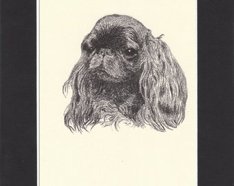 King Charles Spaniel  Vintage Dog Print C. Francis Wardle Bookplate 1935 Drawing Mounted with Mat Spaniel Print King Charles Print